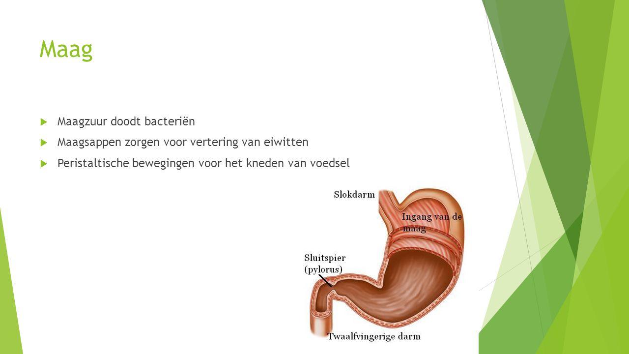 Maag Maagzuur doodt bacteriën