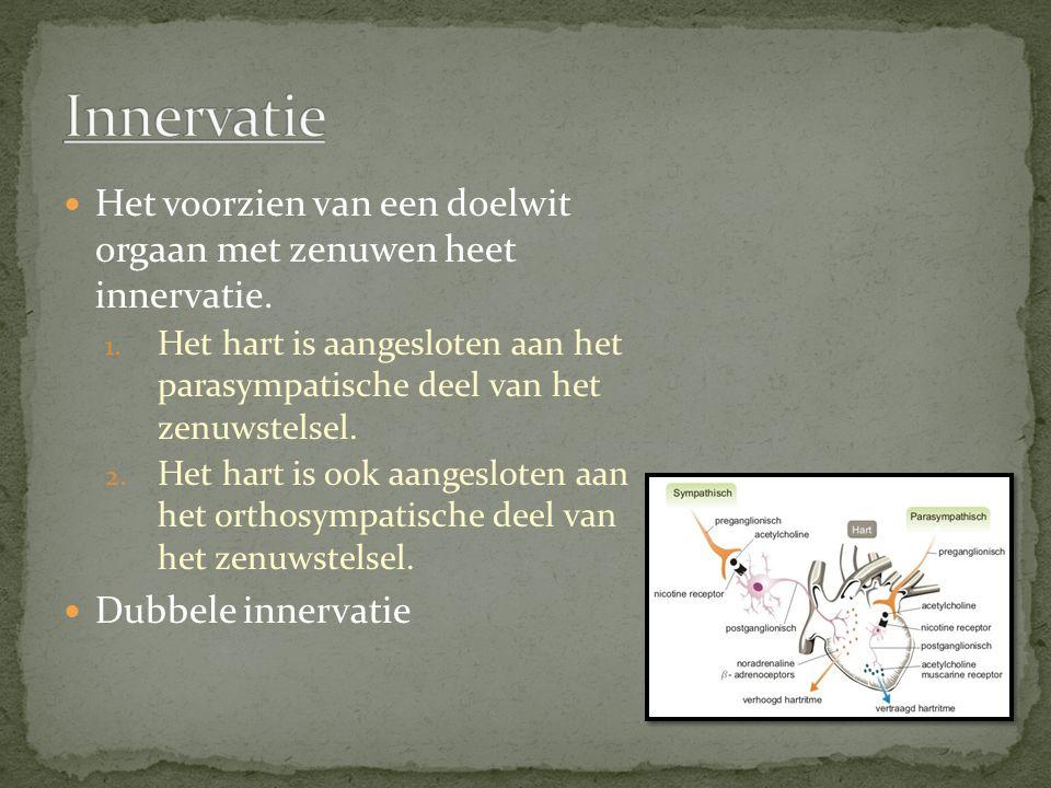 Innervatie Het voorzien van een doelwit orgaan met zenuwen heet innervatie.