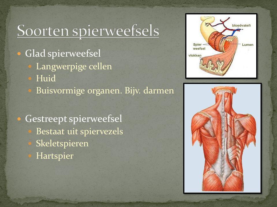 Soorten spierweefsels