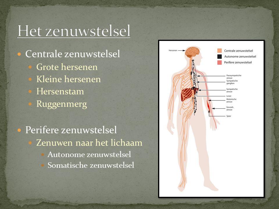 Het zenuwstelsel Centrale zenuwstelsel Perifere zenuwstelsel