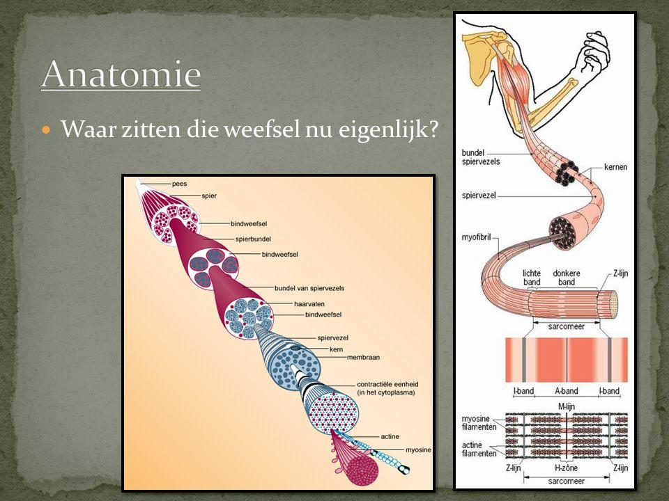 Anatomie Waar zitten die weefsel nu eigenlijk