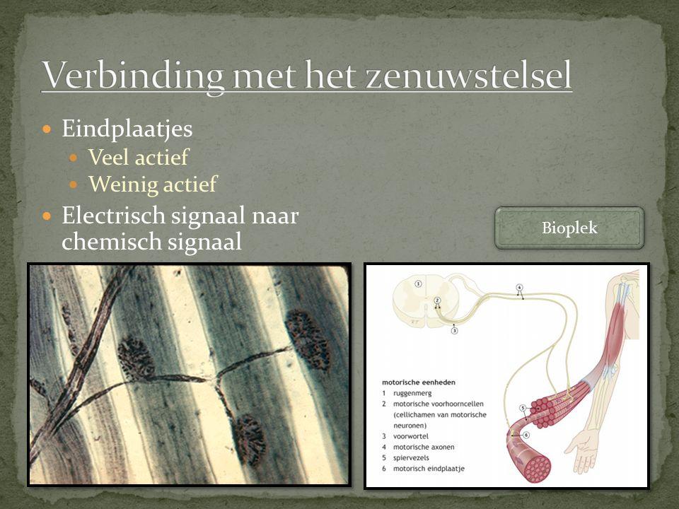 Verbinding met het zenuwstelsel