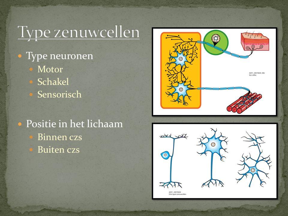 Type zenuwcellen Type neuronen Positie in het lichaam Motor Schakel