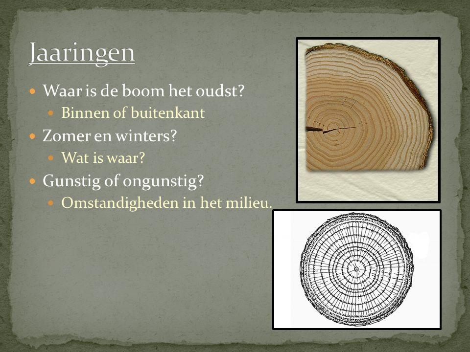 Jaaringen Waar is de boom het oudst Zomer en winters