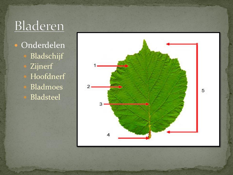 Bladeren Onderdelen Bladschijf Zijnerf Hoofdnerf Bladmoes Bladsteel