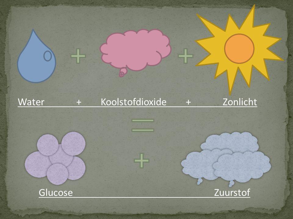 Water + Koolstofdioxide + Zonlicht