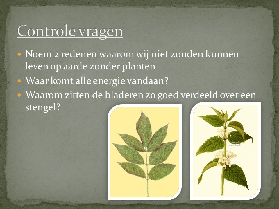 Controle vragen Noem 2 redenen waarom wij niet zouden kunnen leven op aarde zonder planten. Waar komt alle energie vandaan