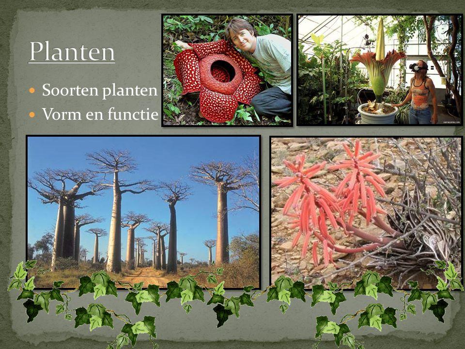 Planten Soorten planten Vorm en functie
