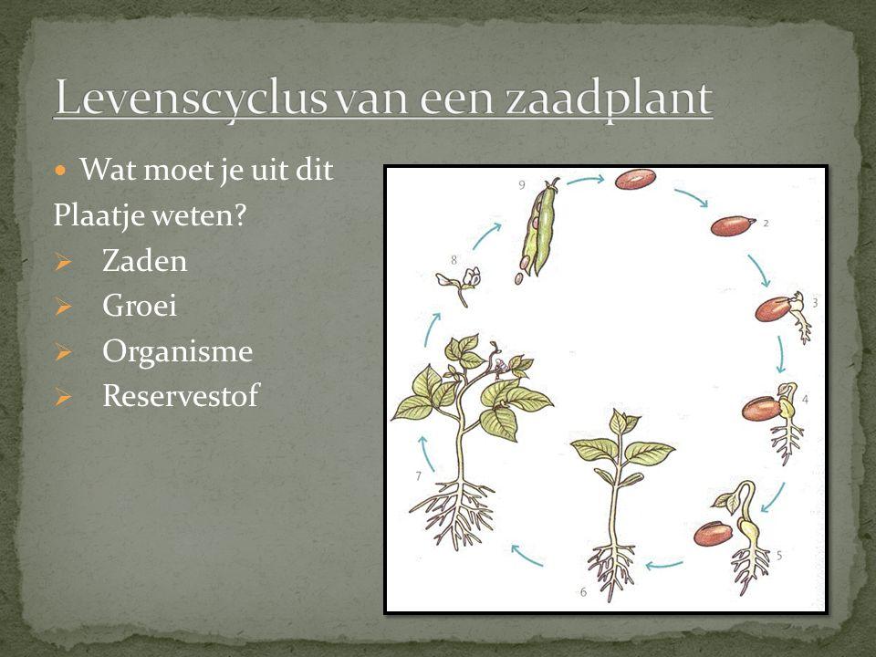 Levenscyclus van een zaadplant