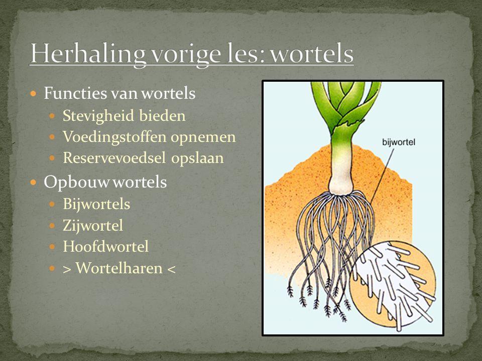 Herhaling vorige les: wortels