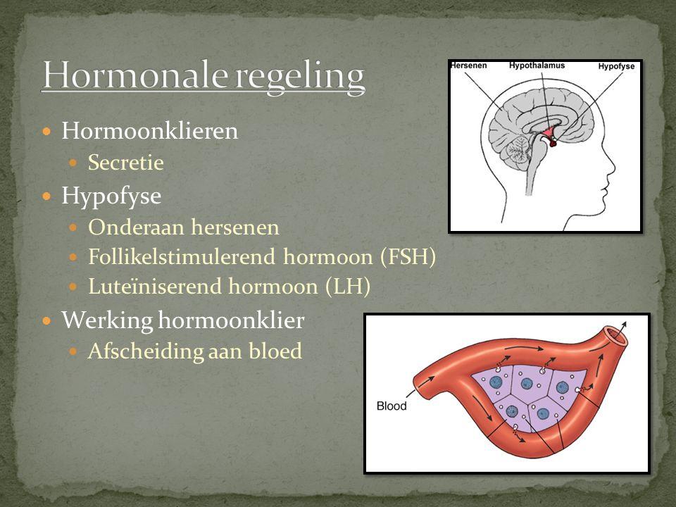 Hormonale regeling Hormoonklieren Hypofyse Werking hormoonklier