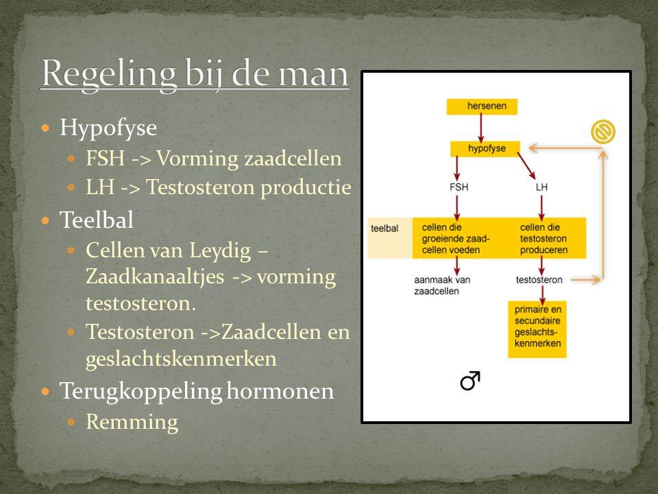 Regeling bij de man Hypofyse Teelbal Terugkoppeling hormonen