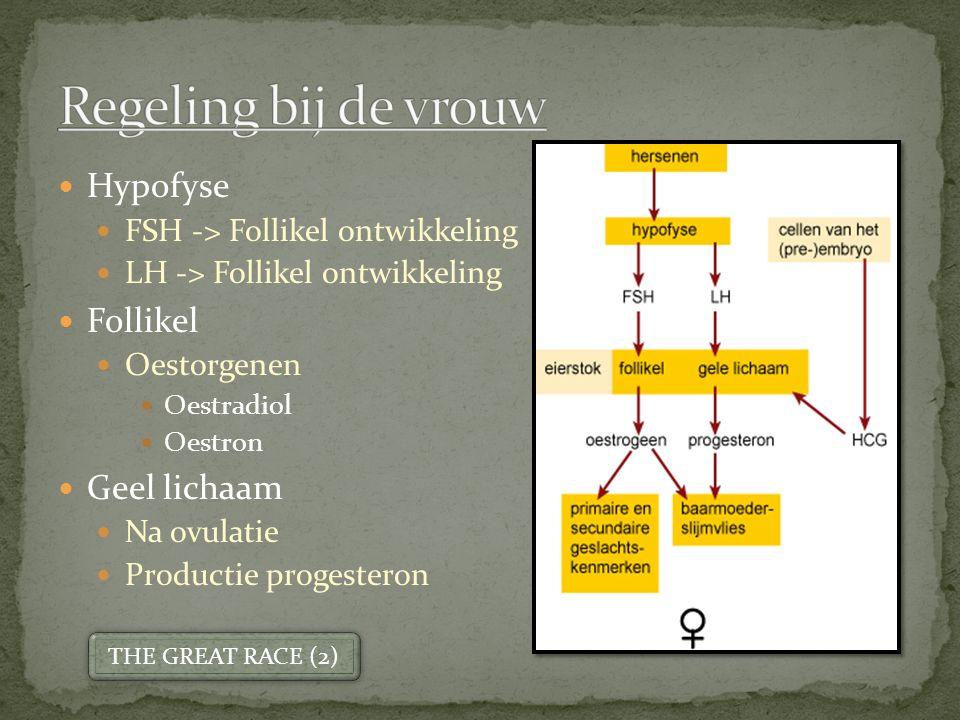 Regeling bij de vrouw Hypofyse Follikel Geel lichaam