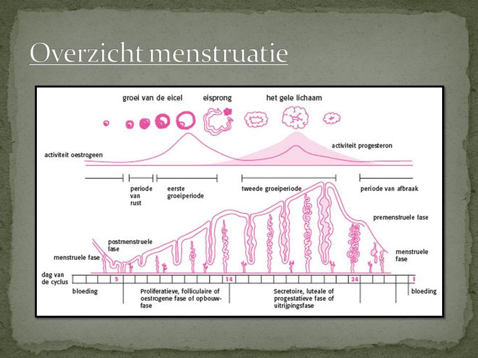 Overzicht menstruatie