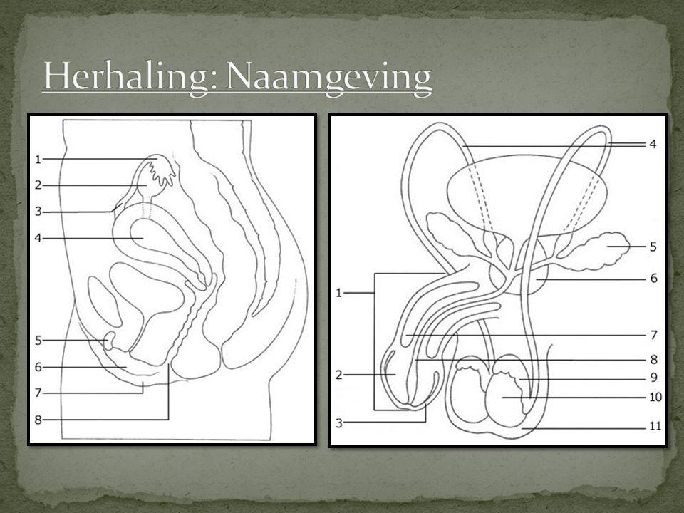 Herhaling: Naamgeving