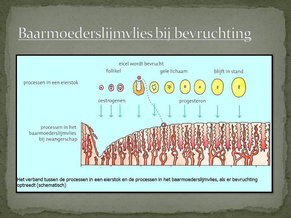 Baarmoederslijmvlies bij bevruchting