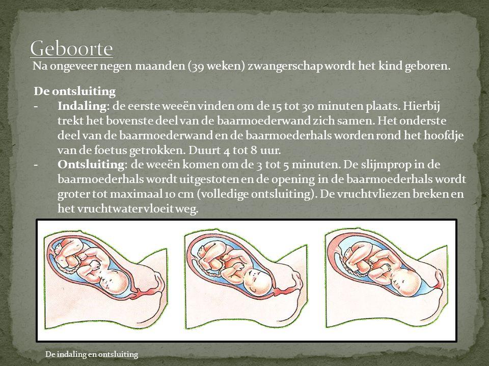 Geboorte Na ongeveer negen maanden (39 weken) zwangerschap wordt het kind geboren. De ontsluiting.