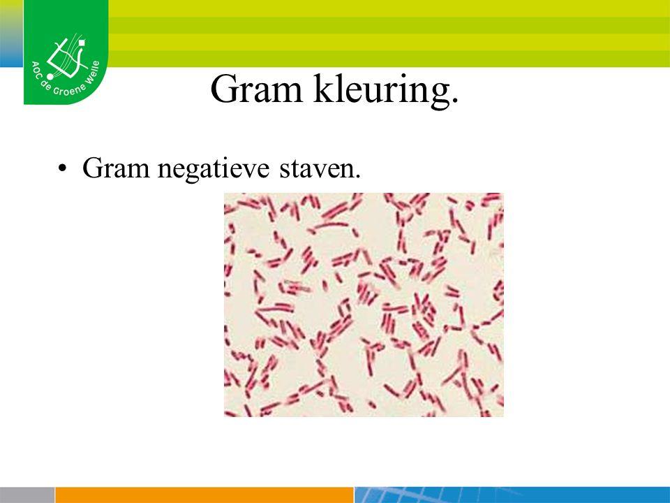 Gram kleuring. Gram negatieve staven.