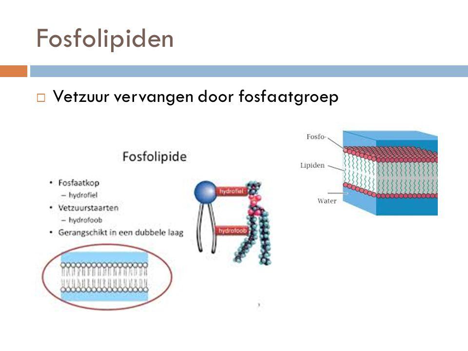 Fosfolipiden Vetzuur vervangen door fosfaatgroep