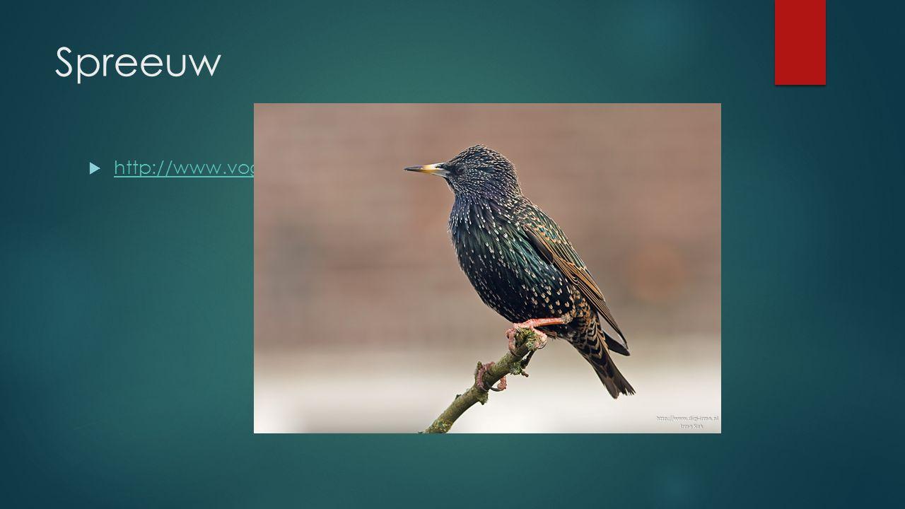 Spreeuw http://www.vogelgeluid.nl/spreeuw