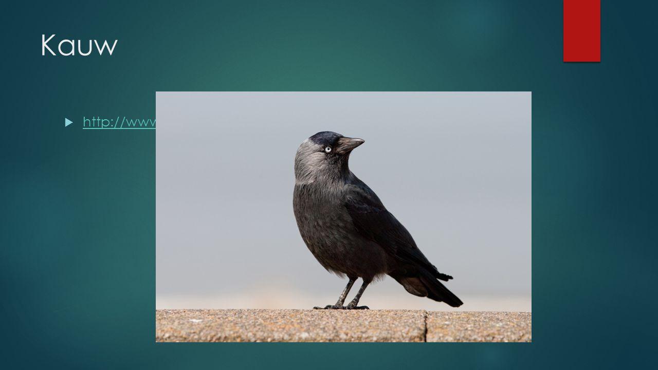 Kauw http://www.vogelgeluid.nl/kauw