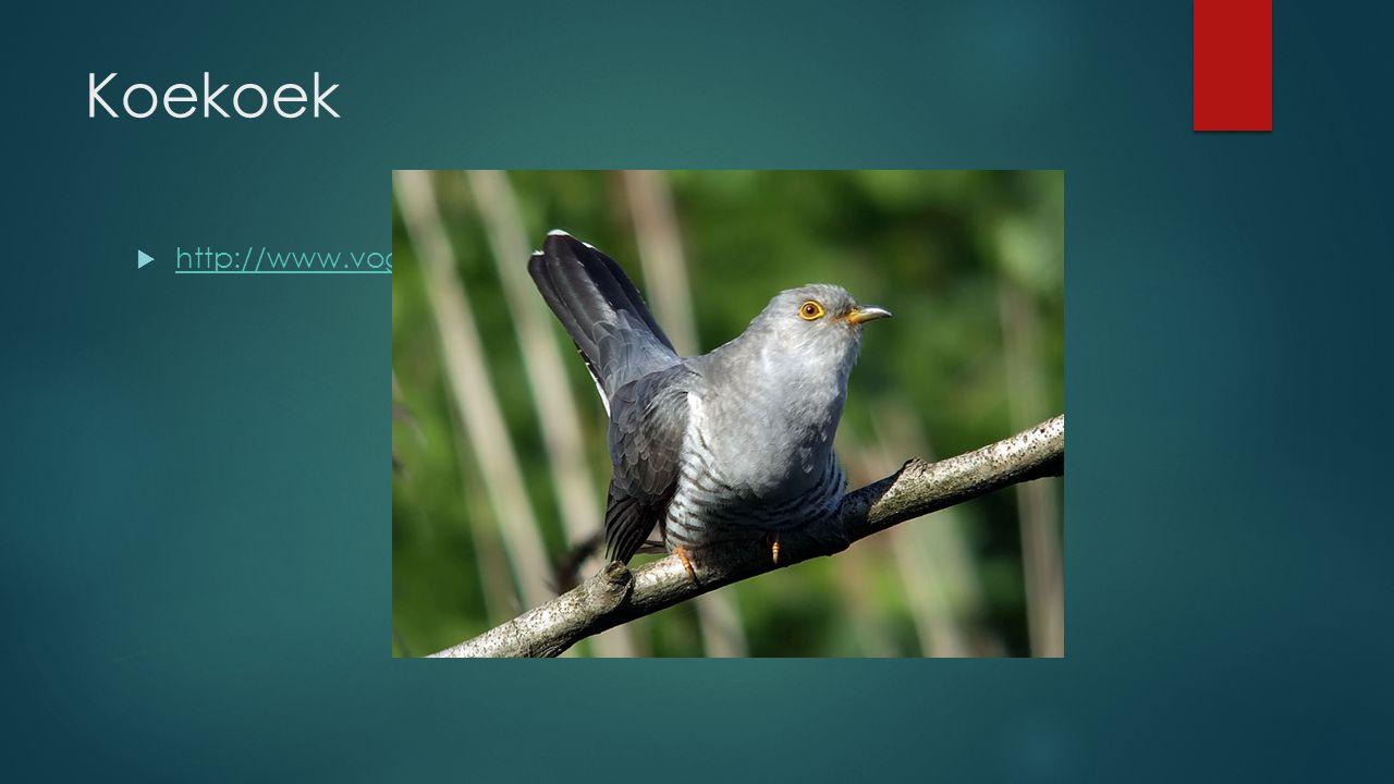 Koekoek http://www.vogelgeluid.nl/koekoek