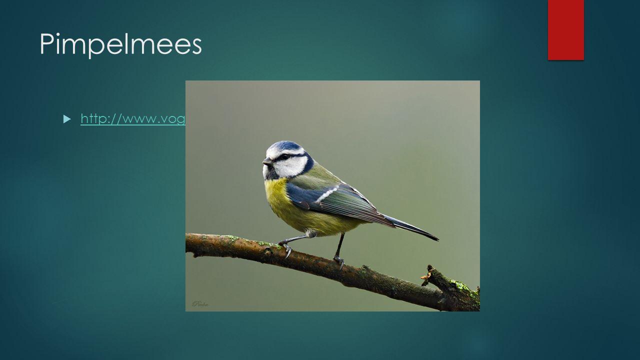 Pimpelmees http://www.vogelgeluid.nl/pimpelmees
