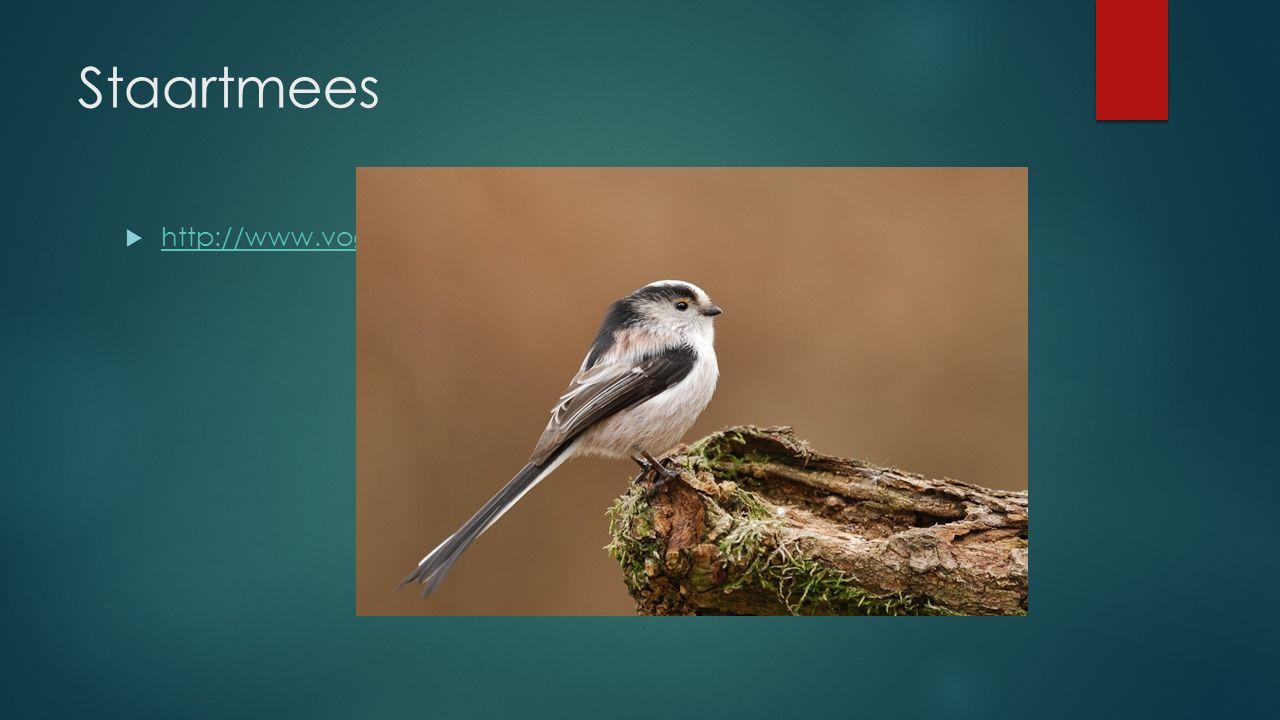 Staartmees http://www.vogelgeluid.nl/staartmees