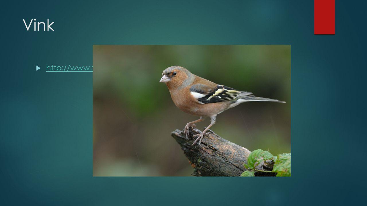 Vink http://www.vogelgeluid.nl/vink