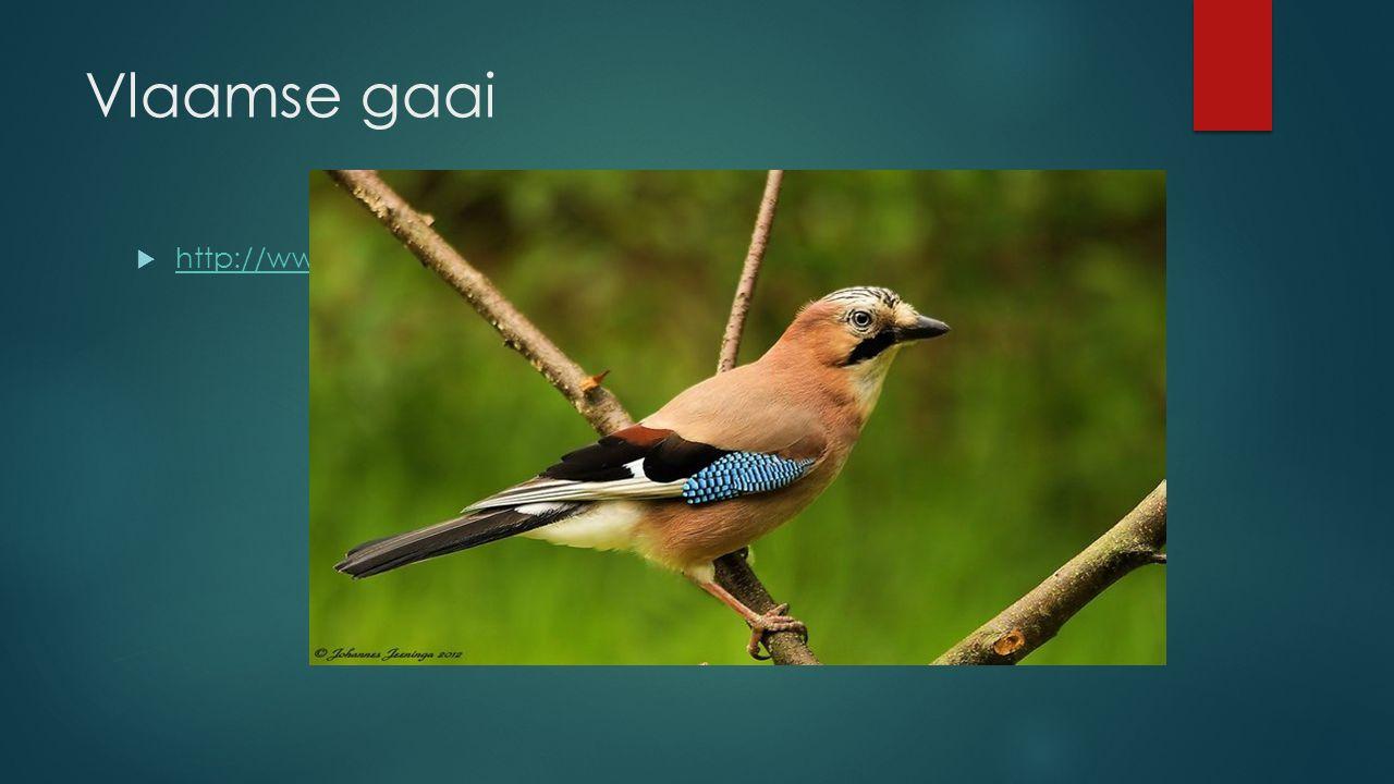 Vlaamse gaai http://www.vogelgeluid.nl/gaai