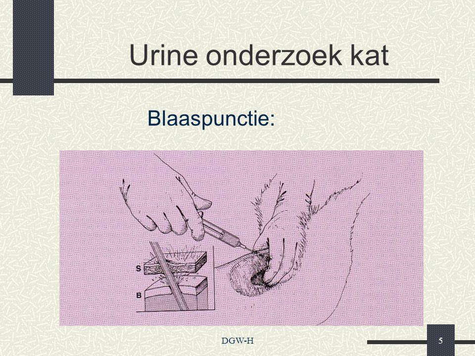 Urine onderzoek kat Blaaspunctie: DGW-H
