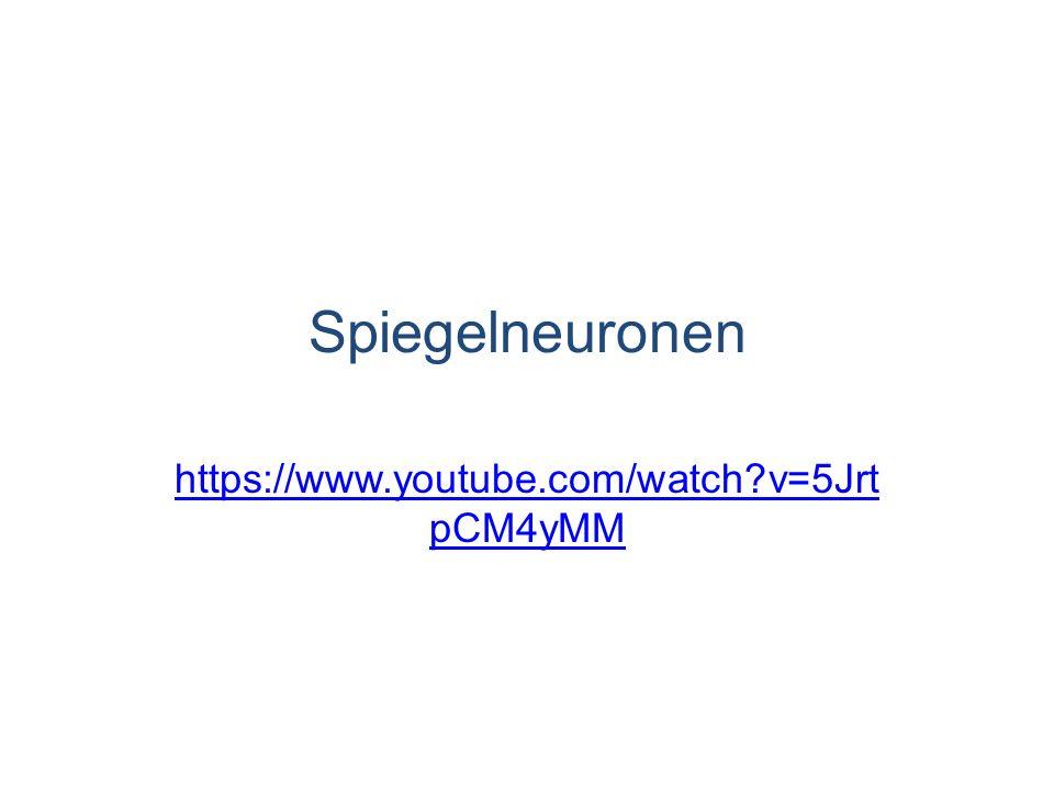 Spiegelneuronen https://www.youtube.com/watch v=5JrtpCM4yMM