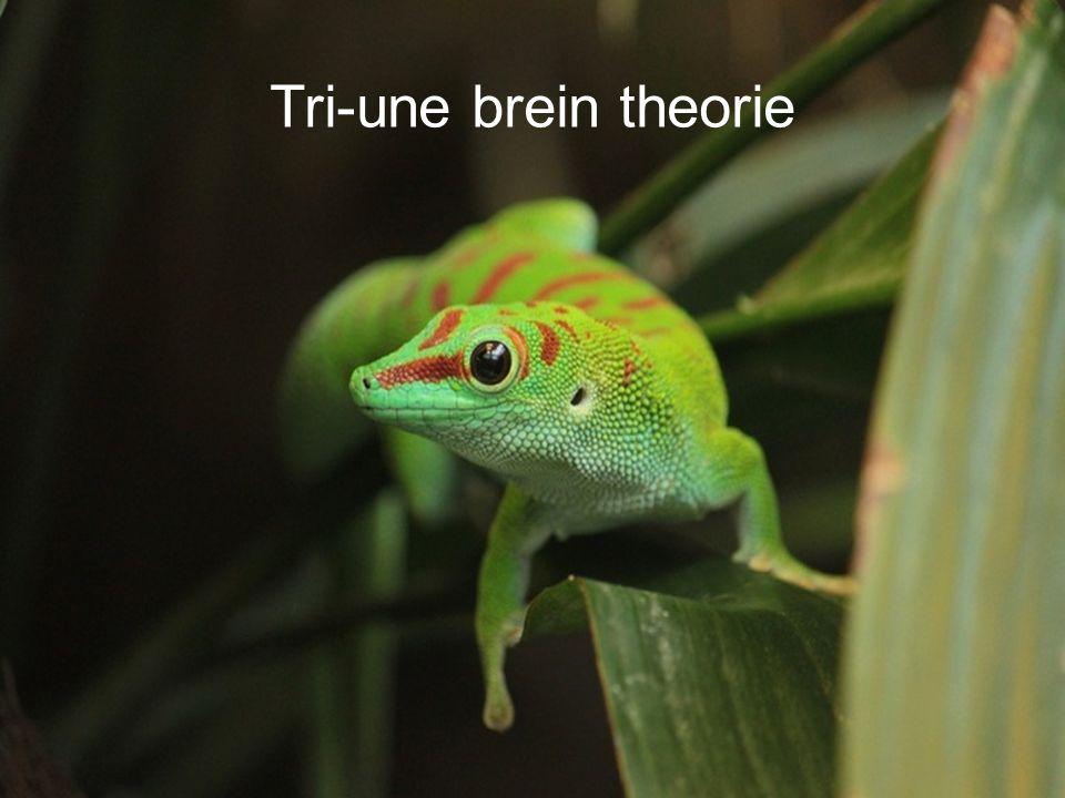 Tri-une brein theorie