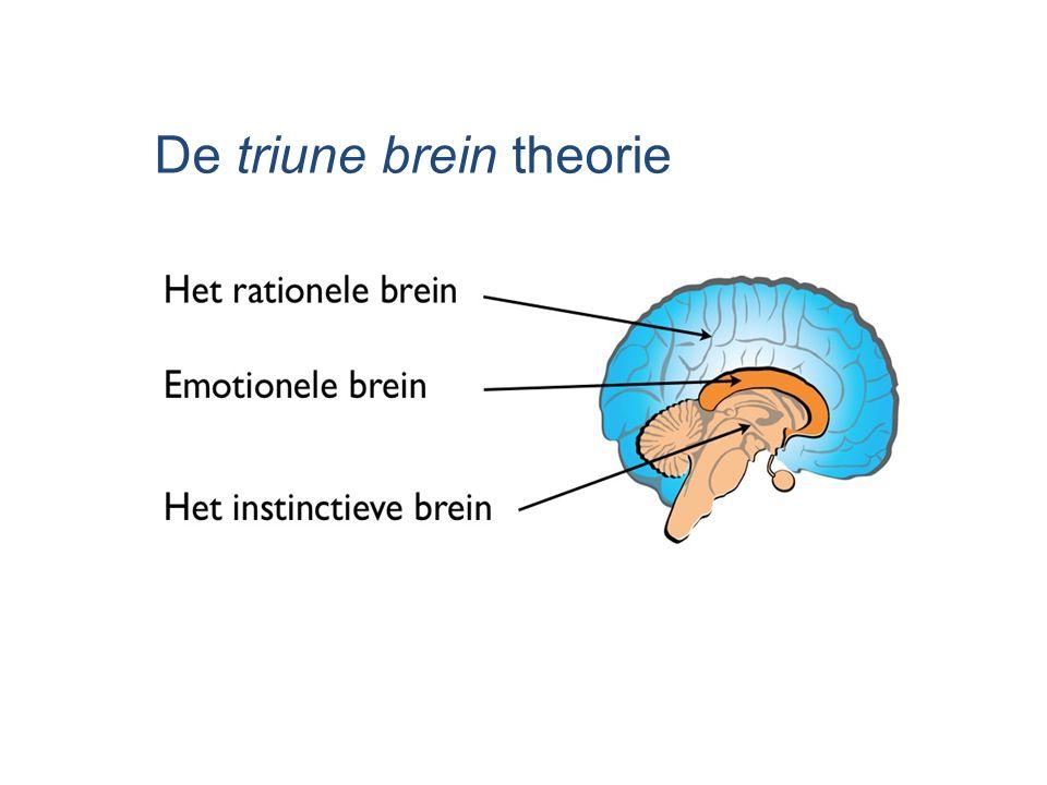 De triune brein theorie