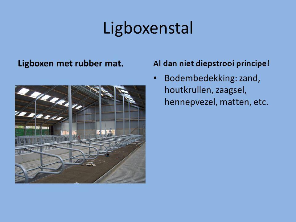 Ligboxenstal Ligboxen met rubber mat.