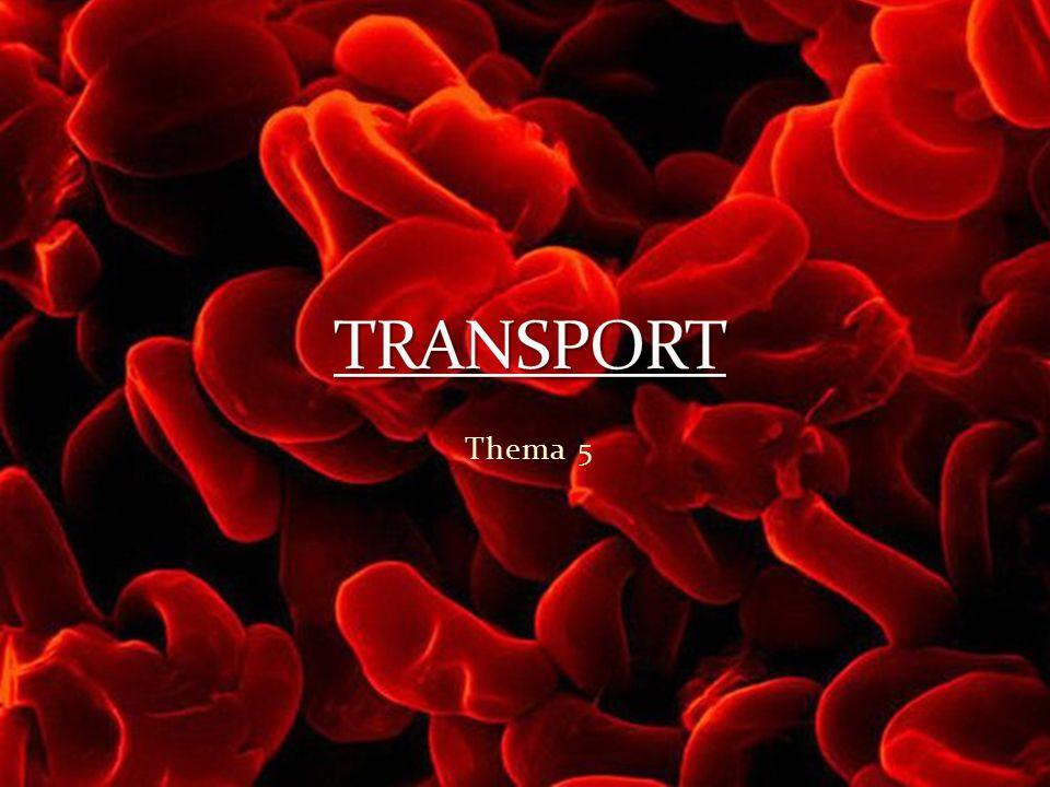TRANSPORT Thema 5