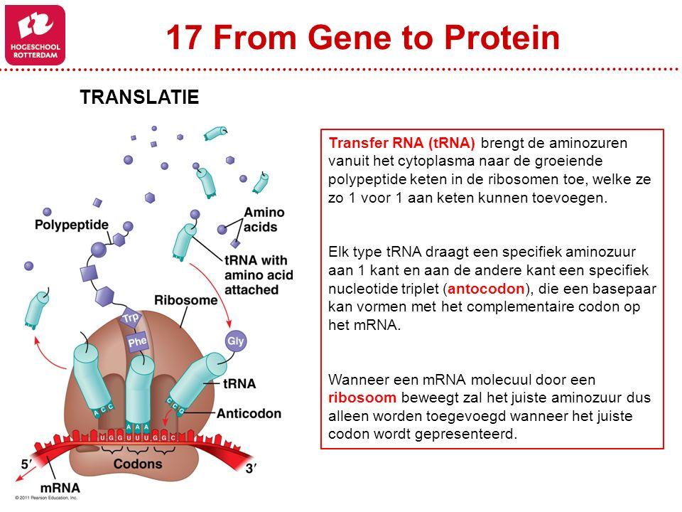 17 From Gene to Protein TRANSLATIE