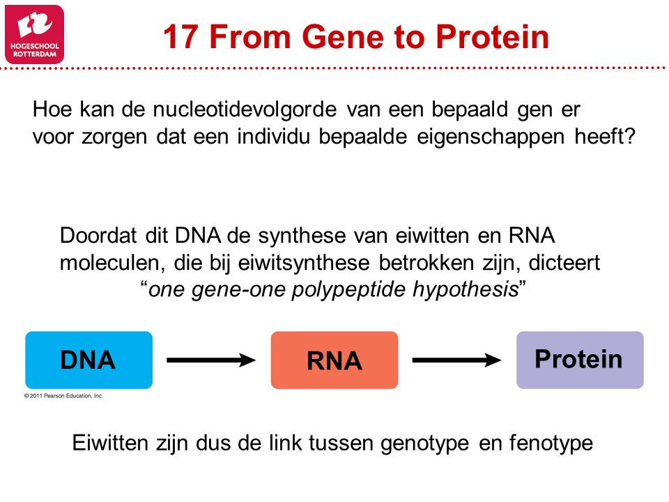 one gene-one polypeptide hypothesis