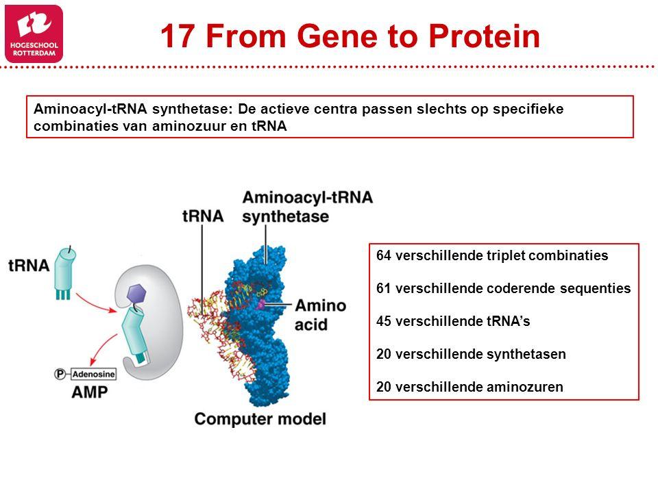 17 From Gene to Protein Aminoacyl-tRNA synthetase: De actieve centra passen slechts op specifieke combinaties van aminozuur en tRNA.