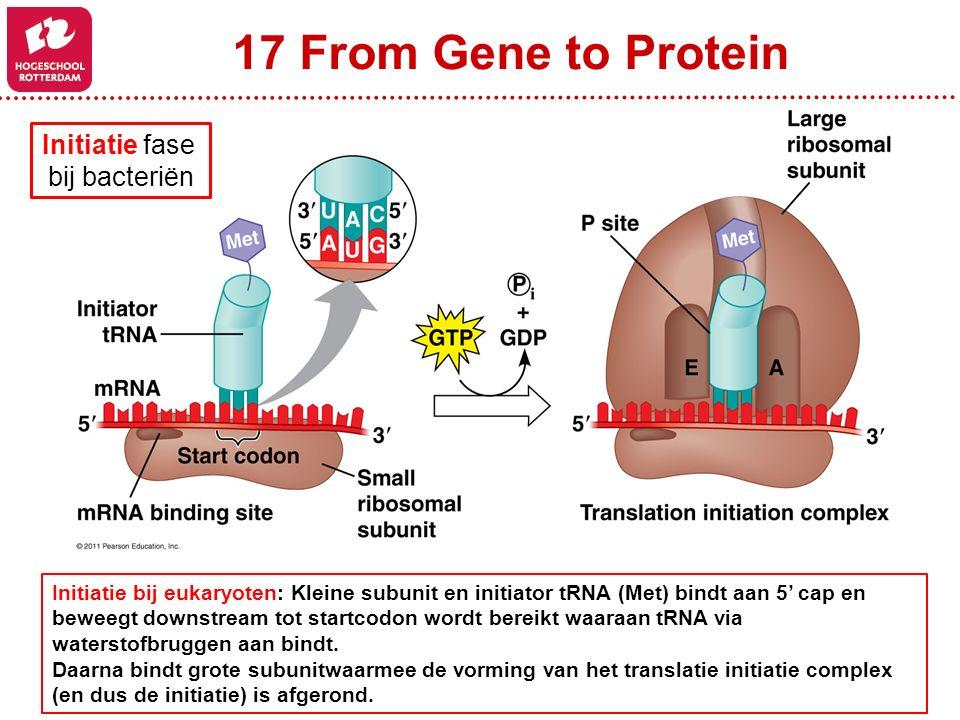 17 From Gene to Protein Initiatie fase bij bacteriën