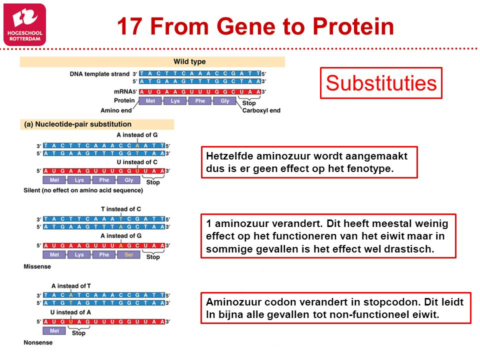 17 From Gene to Protein Substituties