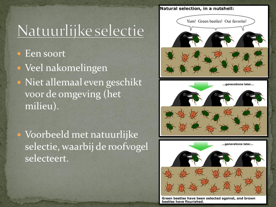 Natuurlijke selectie Een soort Veel nakomelingen
