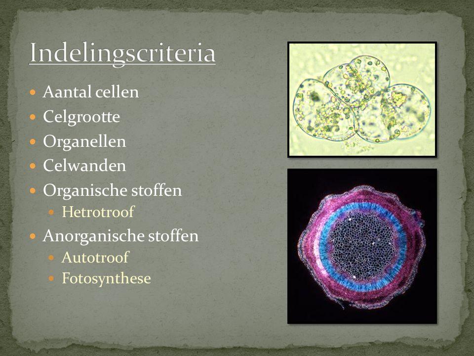 Indelingscriteria Aantal cellen Celgrootte Organellen Celwanden