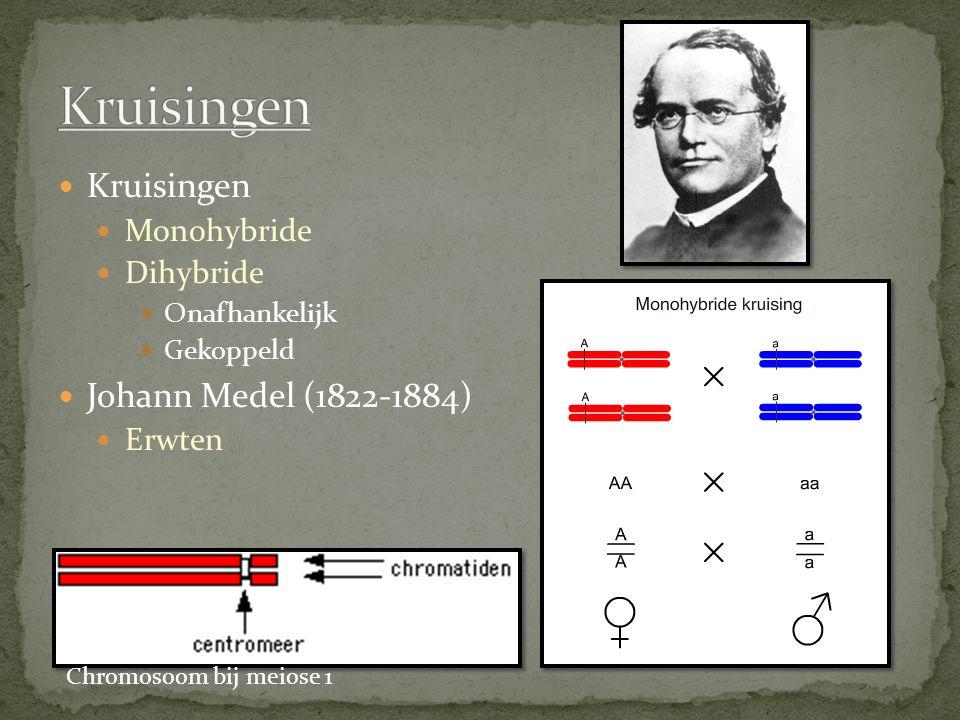 Kruisingen Kruisingen Johann Medel (1822-1884) Monohybride Dihybride