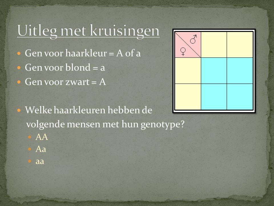 Uitleg met kruisingen Gen voor haarkleur = A of a Gen voor blond = a