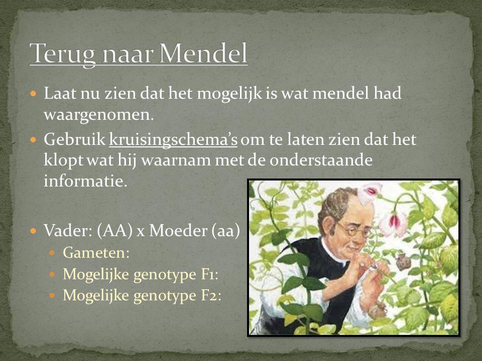 Terug naar Mendel Laat nu zien dat het mogelijk is wat mendel had waargenomen.