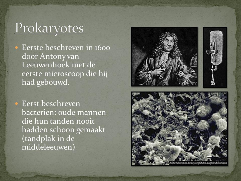 Prokaryotes Eerste beschreven in 1600 door Antony van Leeuwenhoek met de eerste microscoop die hij had gebouwd.
