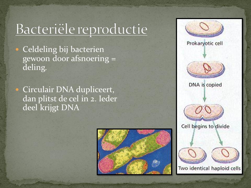 Bacteriële reproductie