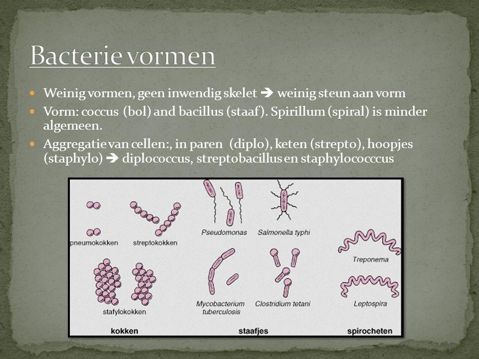 Bacterie vormen Weinig vormen, geen inwendig skelet  weinig steun aan vorm.