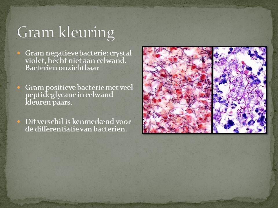 Gram kleuring Gram negatieve bacterie: crystal violet, hecht niet aan celwand. Bacterien onzichtbaar.